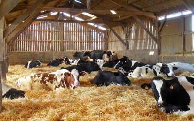 A Successful Appeal for a Former Dairy into 2 Dwellings